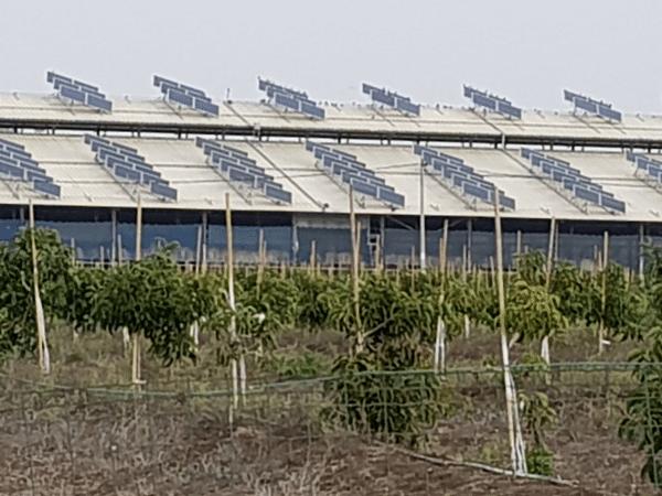 """מכרז הענק השני של רשות החשמל מסתיים בהצלחה מסחררת, ובתעריף הסולארי הנמוך אי פעם! העלות להקמת חווה סולארית במכרז: 19.78 אגורות לקוט""""ש"""